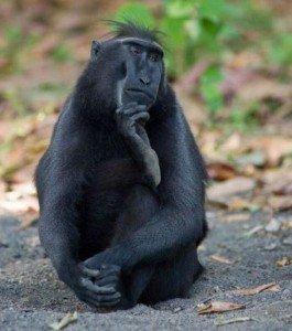 singe qui pense